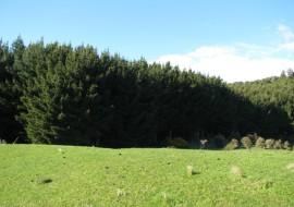Waipati Road